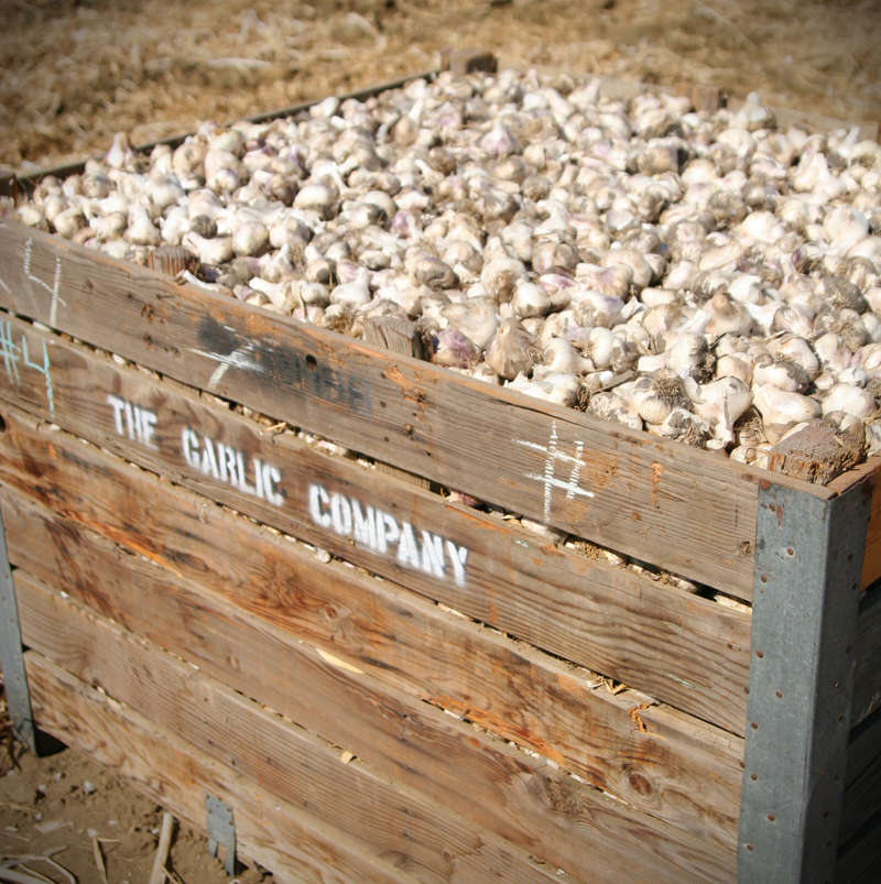 Garlic Bins