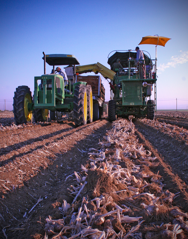 Garlic Harvester